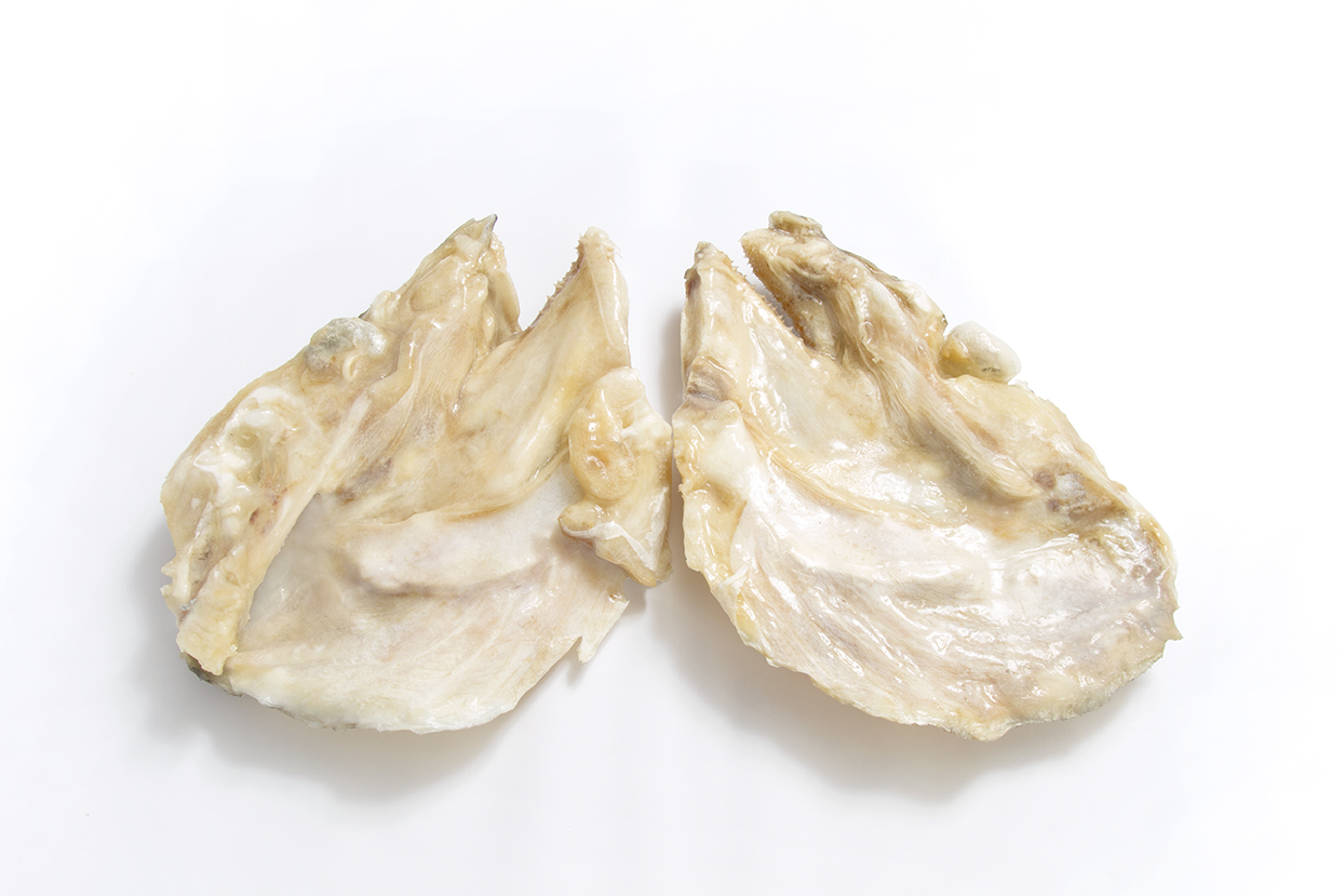 Caras de Bacalhau Jumbo