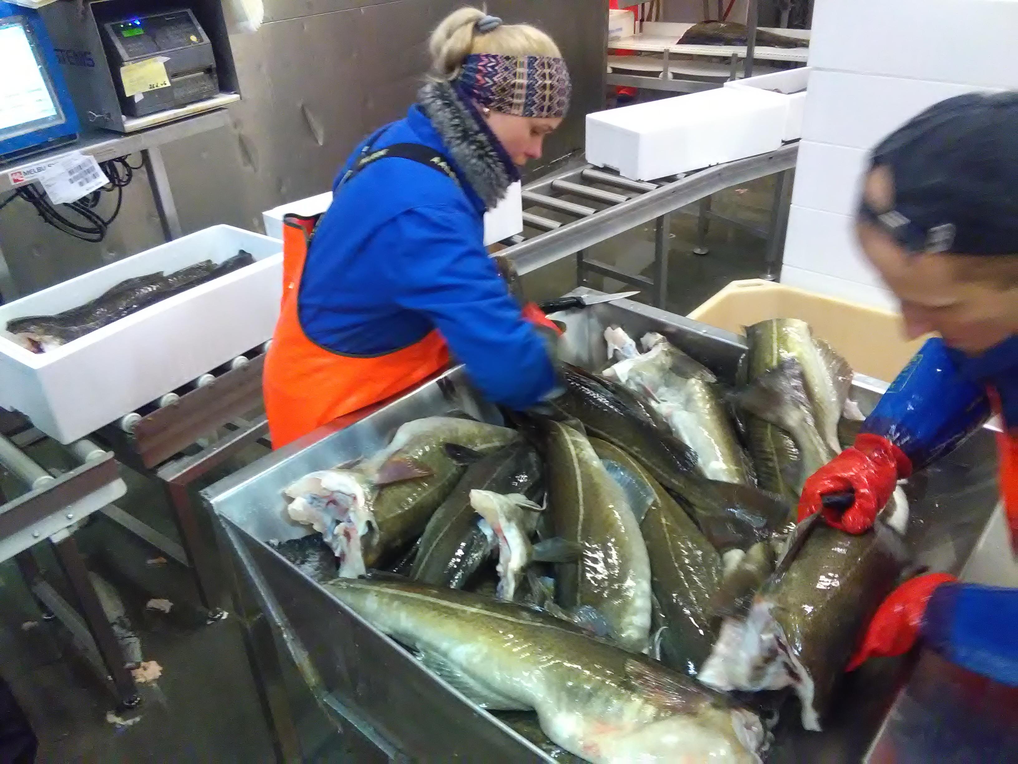 RCSI exporta bacalhau fresco premium para os EUA